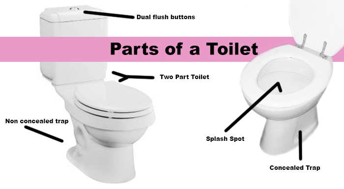 Everything You Ever Wanted To Know About Toilets But Were